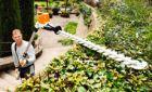 Stihl Large Gardens & Professional AP